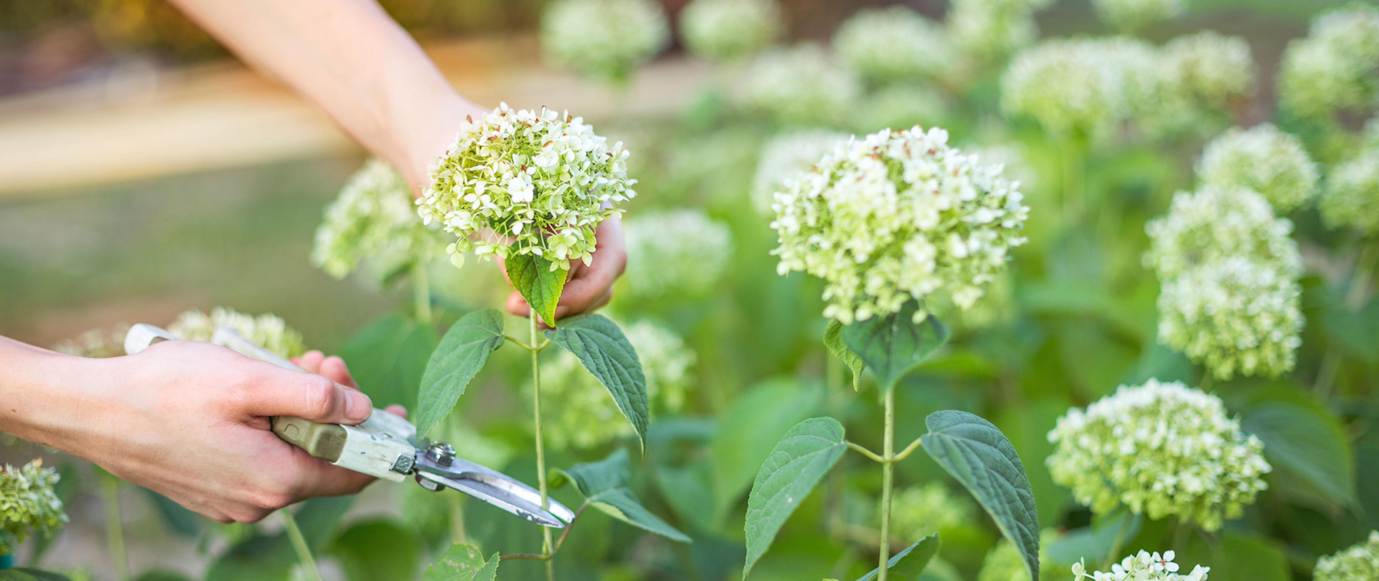 Cut Flower Garden Nc Greenprints